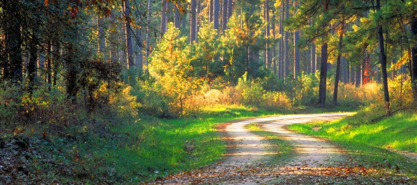 Texas Forest Country